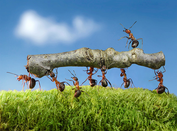 Ants-Carrying-Log